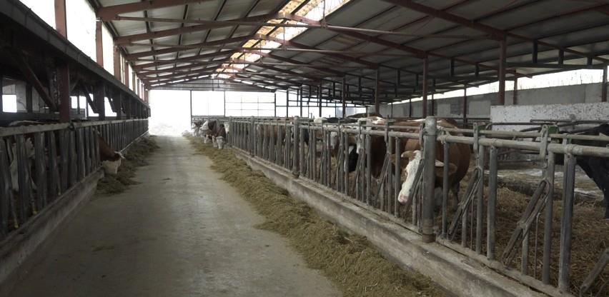 Firma Zuca iz Cazina planira proizvoditi 1500 litara mlijeka dnevno